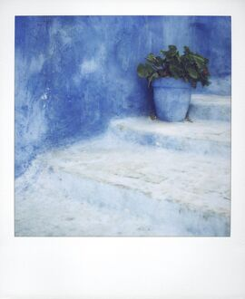 Polaroid of geranium in blue painted plantpot on steps