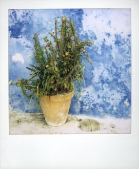 Polaroid of plant pot against bluewashed wall
