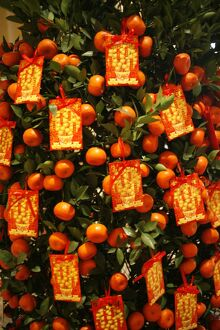 Tangerine good luck symbols, Chinese New Year decoration, Macao, China, Asia