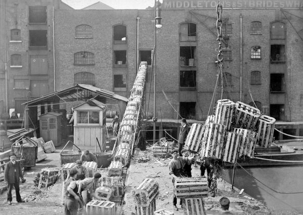 BUTLER'S WHARF, Shad Thames, London. A cargo of bananas in specially ventilated crates is unloaded and transferred into the warehouse via a conveyor belt while two foremen in bowler hats look on. A tally is kept in the hut in the centre of the picture