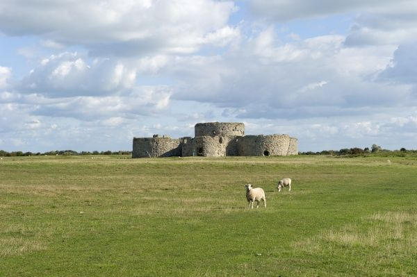 CAMBER CASTLE, Rye, East Sussex. General view with sheep