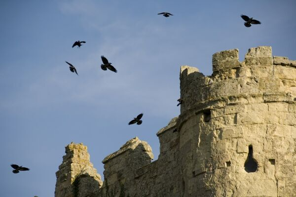 CARISBROOKE CASTLE, Isle of Wight. Crows circling above the gatehouse