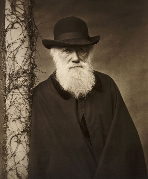 DOWN HOUSE, Downe, Kent. Portrait of Charles Darwin c 1880