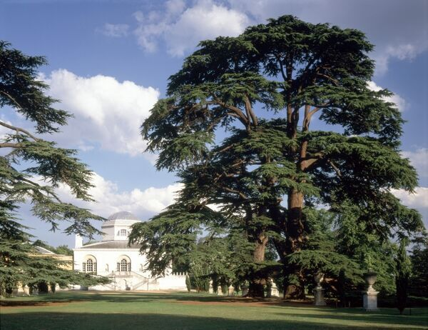 CHISWICK HOUSE, London. Exterior view of the house from the gardens
