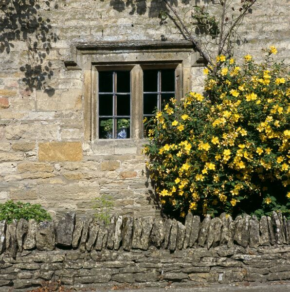 LOWER SLAUGHTER, Cotswolds, Gloucestershire. Detail of cottage showing stone mullioned window