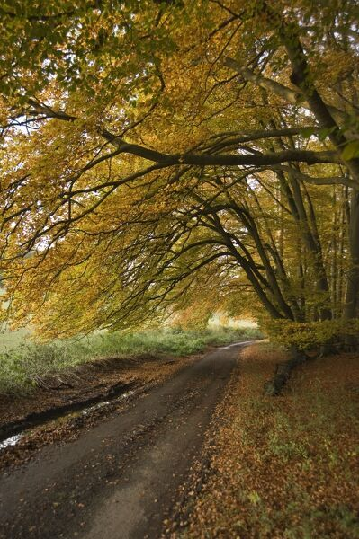 Autumn leaves cover a rural road in Oxfordshire