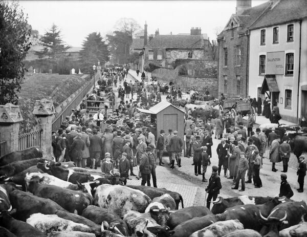 MARKET PLACE, Faringdon, Oxfordshire. The cattle market underway, with the Salutation Inn to one side and the churchyard to the other. Faringdon was granted a market in 1218. Photographed by Henry Taunt in 1904