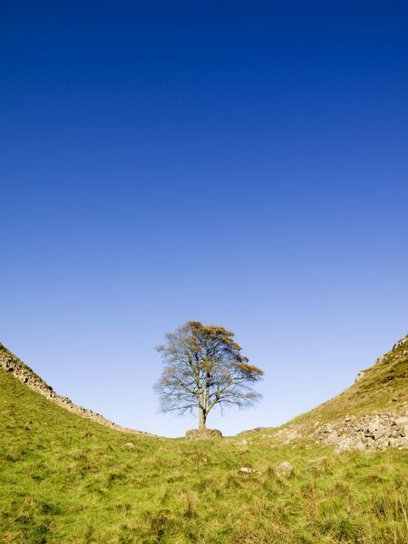HADRIAN'S WALL, Northumberland. Sycamore Gap near Steel Rigg view towards the wall. Used as a film set for Robin Hood Prince of Thieves. hadrian