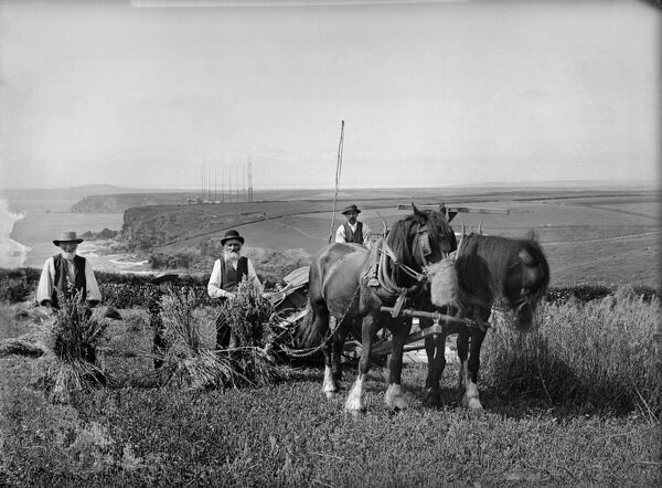 "Mr Richard Harvey and workers harvesting at Trenance, Mullion, Cornwall, 1900-€""1"