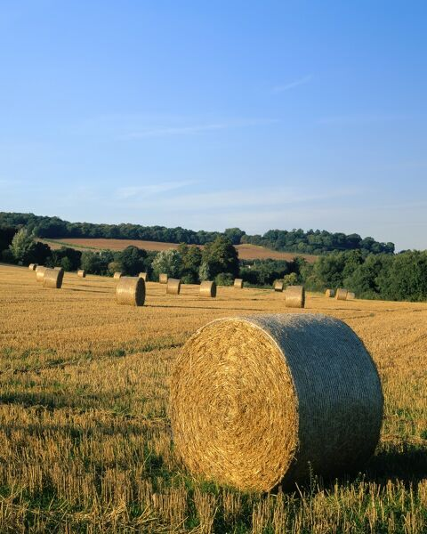 KENT COUNTRYSIDE, View of hay bails / haywheels in a field near Farningham