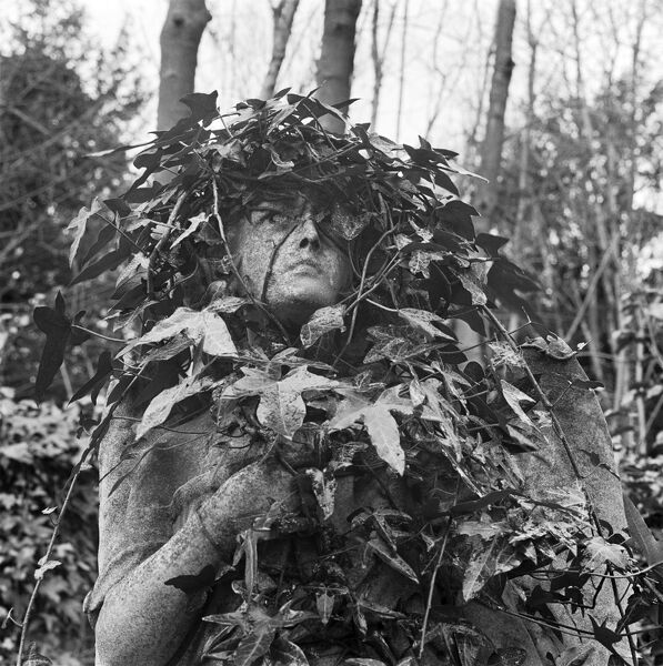 HIGHGATE CEMETERY, Swains Lane, Highgate, Hampstead, London. The ivy covered face of a statue on a tomb in the West Cemetery. Photographed by John Gay during the early 1980s