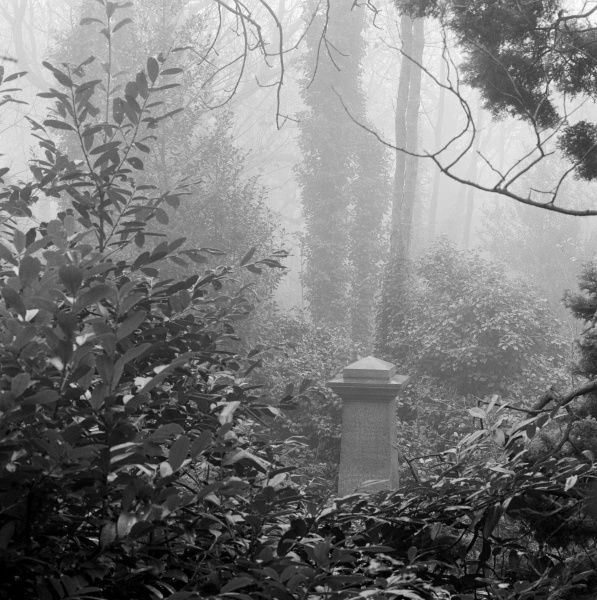 HIGHGATE CEMETERY, Hampstead, London. View through shrubbery towards the pedestal tomb of Frank Holl in the West Cemetery
