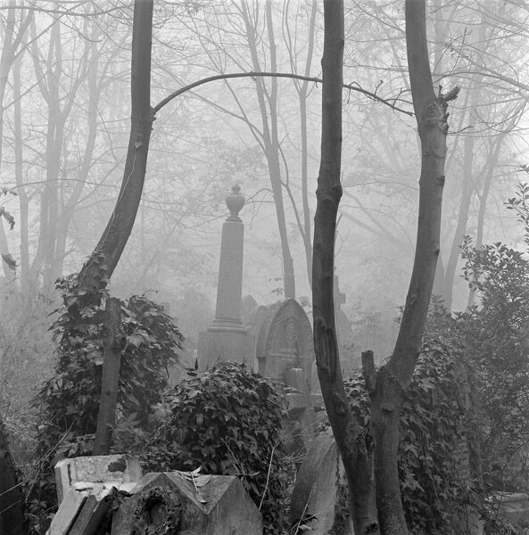 HIGHGATE CEMETERY, East Cemetery, Swains Lane, Highgate, Hampstead, Greater London. Looking between the slender trunks of three ash trees growing amongst the gravestones of the East Cemetery. Photographed by John Gay. Date range: 1970-1999