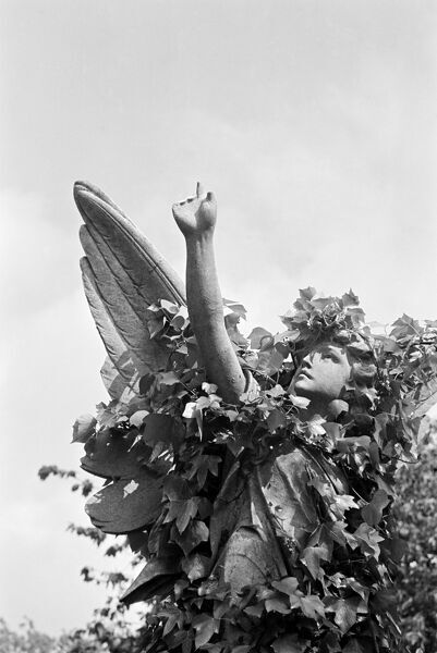 HIGHGATE CEMETERY, Hampstead, London. The statue of an angel pointing towards heaven in the East Cemetery. Photographed by John Gay in May 1983