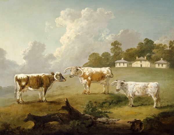 KENWOOD HOUSE, London: The Iveagh Bequest. Three Long-Horned Cattle at Kenwood, 1797 by Julius Caesar Ibbetson. Oil on canvas 26 x 32 in. (66 x 81.2 cm). 88029298