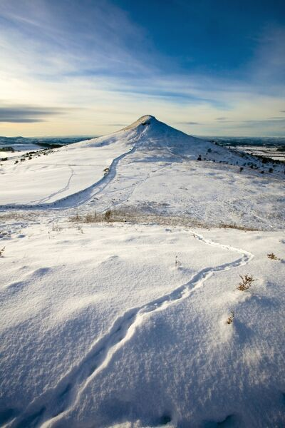 ROSEBERRY TOPPING, North Yorkshire. Snow view of hill on North Yorkshire moors with animal tracks