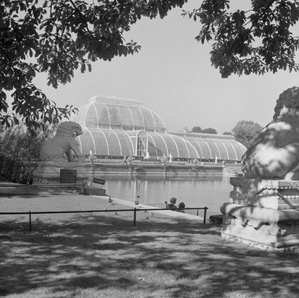 ROYAL BOTANIC GARDENS, Palm House, Kew, London. A view across lawn to the pond at Kew Gardens looking west to the Palm House, an oriental lion statue to left, framed by trees above. Photographed by John Gay. Date range: January 1962 - May 1964