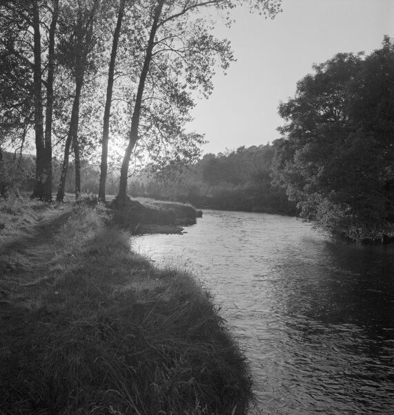 A view of a river running through a rural wooded area, with the low sun shining through tree foliage in the midground. Possibly photographed in the woodland gardens at Dartington Hall, South Hams, Devon. Date range 1955-1965. John Gay