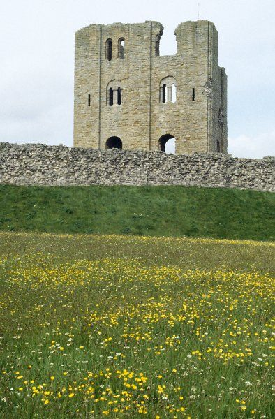 SCARBOROUGH CASTLE, North Yorkshire. Grassland management. Mixed sward in flower in long grass area with castle wall and keep in the background