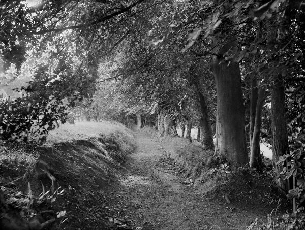 TERRACE GARDEN, West Ilsley House, Berkshire. A pretty pathway lined with trees in the garden of the 18th century manor house. Photographed by Henry Taunt (active 1860 - 1922).?Sunken lane