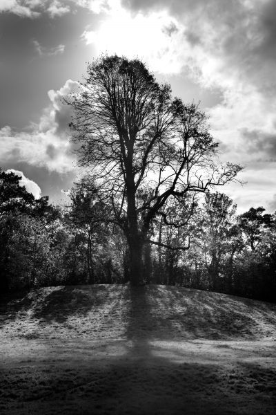 ST AUGUSTINE'S ABBEY, Canterbury, Kent. Tree on mound to south east of the ruins. Sun breaking from behind the clouds - monochrome