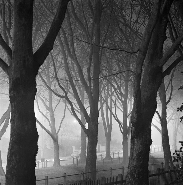 SOUTH END ROAD, Hampstead, London. Looking north-west through trees and fences in the mist towards South End Road, with lit street lights and houses. Photographed by John Gay. Date range: January 1962 - May 1964