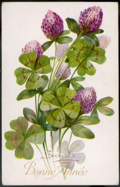 Clover plant with several four-leaf clusters
