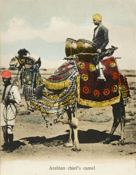 An Arabian Chieftain's camel and drummer boy with his kettle drums - Aden, Yemen