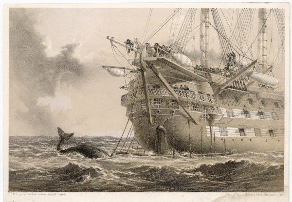 The first, unsuccessful cable is laid by HMS 'Agamemnon' : an inquisitive whale crosses the line