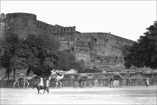 View of the Agra Fort, Agra, India, also known as Lal Qila, Fort Rouge and Red Fort of Agra. It can be more accurately described as a walled palatial city. The great Mughals Babur, Humayun, Akbar, Jehangir, Shah Jahan and Aurangzeb lived here