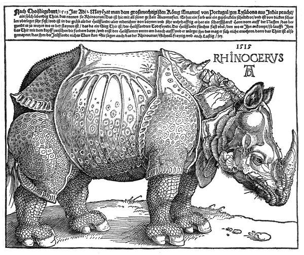 An Indian rhinoceros, is the largest of the Asian species, as depicted by Albrecht Durer