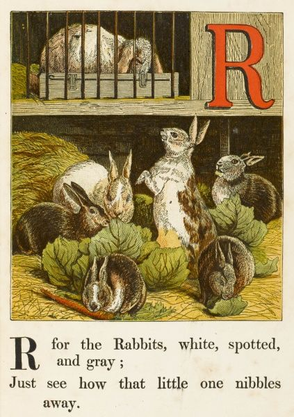 'R' for the rabbits, white, spotted, and gray