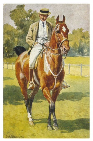 A gentleman rider on an American saddle horse