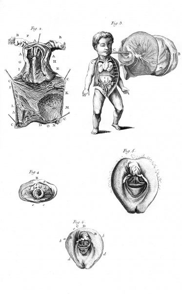 Anatomy of the sexual organs of the woman according to Haller, Kulm and Huber. Date: Circa 1760