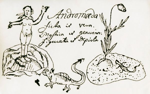Drawing of Andromeda polifolia and a lizard in Carl von Linnes Iter Lapponicum 1732. Date: 1732