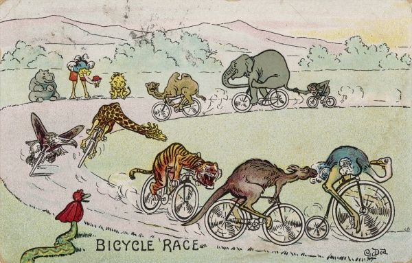 Various animals compete in a cycle race : the ostrich leads on his penny-farthing, but the kangaroo is catching up