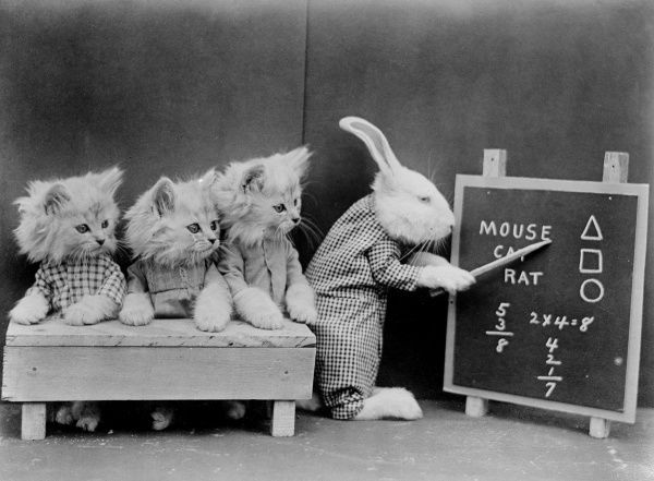 A rabbit teacher points to the blackboard, watched by three cat pupils! Date: early 1930s