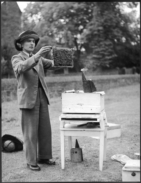 The Apiarist - a bee keeper demonstrating the examination of frames of brood