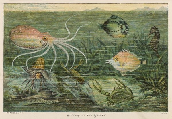 A mixture of fish, octopus, crabs, sea horses and shellfish on the sea bed