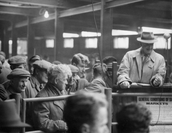 An auction in progress at Newton Abbott Livestock Market