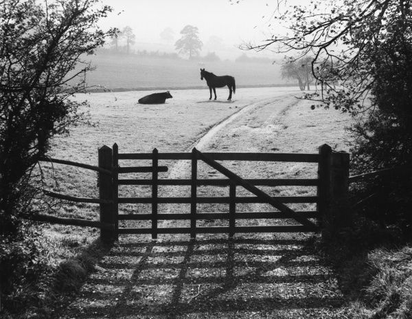 Autumn mist and the sun's shadows make an attractive photograph, with a horse and cow resting harmoniously together in a field near Brington, England