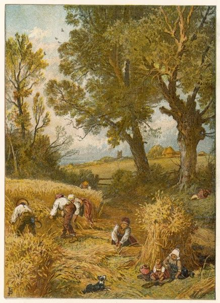 Harvesting by hand - an idyllic scene in the English countryside