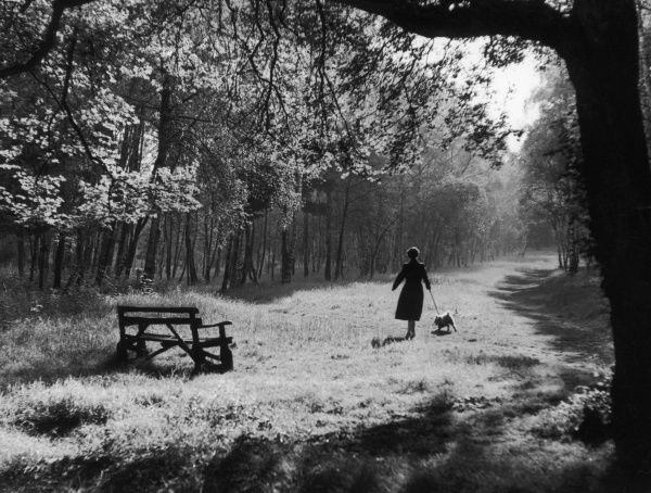 A woman walking her dog in Whippendell Woods, near Watford, Hertfordshire, England