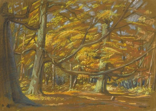 Autumnal wooded scene