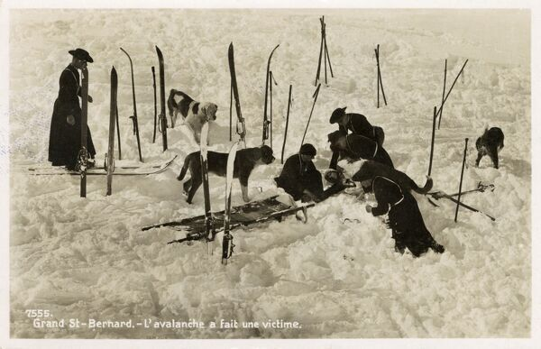 At the Hospice du Grand Saint- Bernard (2472m), dogs are trained to rescue unfortunate travellers who lose their way in the darkness and snow on the Alpine pass. Here the dogs and the priests attend to a skier caught in an avalanche. Date: 1937