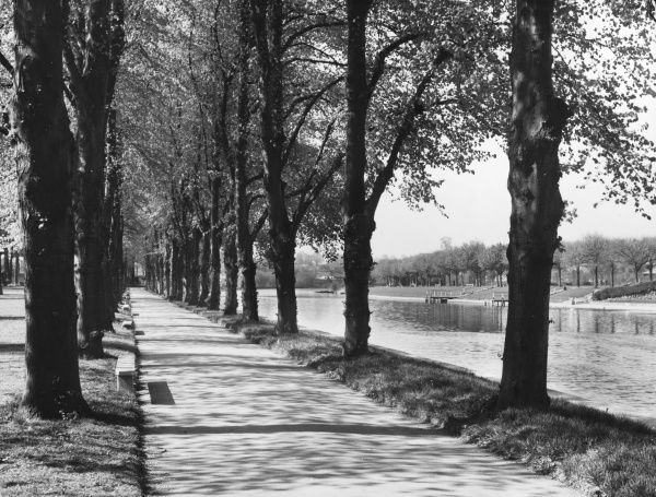 'The Cathdral of the Trees' : Sunshine and shadow during the early morning, an impressive avenue of tall trees set beside the beautiful River Avon at Evesham, England