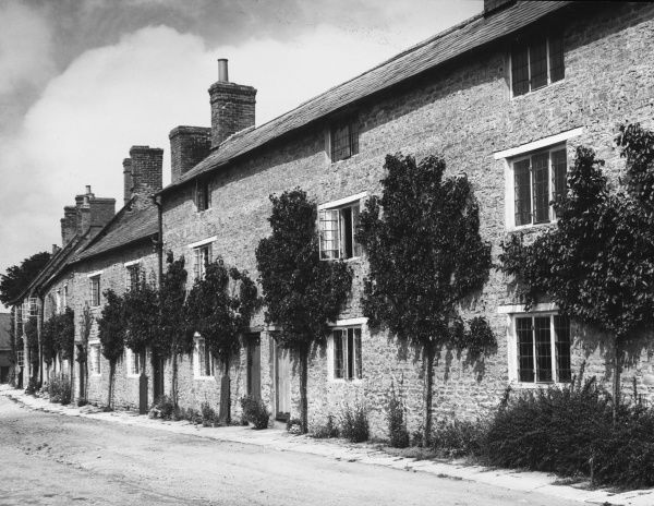 Cottagers in this Northants village grow apricots on the walls of their cottages. When the fruit is ripe, the fruit is harvested, sold and the money used to pay the rent