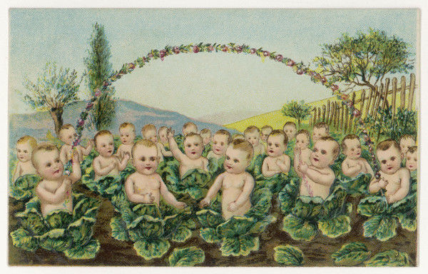 A fine crop of babies in the cabbage field !