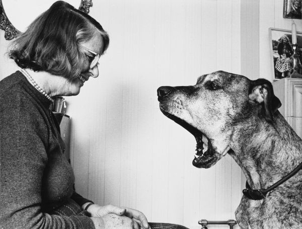 Famous dog trainer Barbara Woodhouse (1910 - 1988), seen here with Junia the Great Dane doggie film star, who has been taught to yawn on command! Date: late 1960s