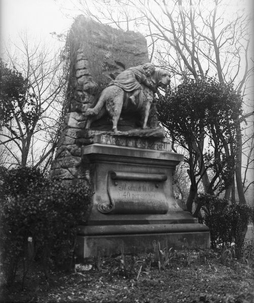 Memorial statue to 'Barry', a St Bernard dog who rescued 42 people in the Alps, but was killed by the 43rd who thought the dog was attacking him, Asnieres cemetery, Paris
